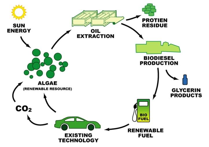 FOTO-1-ciclo-biodiesel