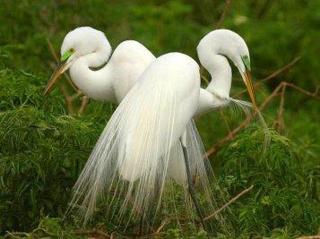 903585__beautiful-white-birds_p