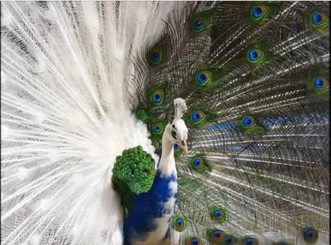 Las aves más hermosas del mundo