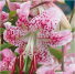 "Lilium auratum (山百合Yamayuri; literalmente ""lirio de montaña"")"