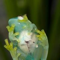 Las ranas más extrañas