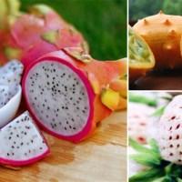 15 extrañas frutas que tal vez no conozcas
