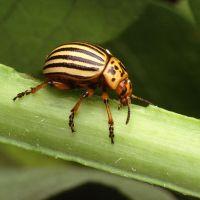 Tratamientos ecológicos contra pulgones, mosca blanca, araña roja, cochinillas y otras plagas